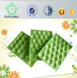 FDA Test Standard Canada Market Popolar Avocado Use Plastic Trays Packaging Made in China