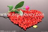 High Quality Dried Chinese Medlar Fruit