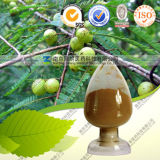 Factory Direct Supply High Quality Phyllanthus Emblica Extract