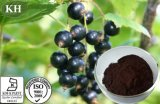 Black Currant Extract: Anthocyanins 10%, 25% by HPLC