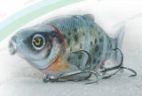 Rapala Quality Plastic Fishing Lure--UV Coated 5 Section Fishing Lure (HW016)