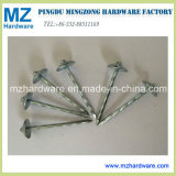 """Bwg9*2.5"""" Galvanized Umbrella Head Roofing Nail/Roofing Screw Nail"""