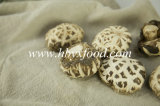 White Flower Shiitake Mushroom Agricultural Products
