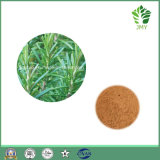 Natural Rosemary Extract, Carnosic Acid 60%, Rosmarinic Acid 98%