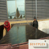 Water-Proof Film Faced Plywood, Construction Plywood 1220*2440*9-21mm