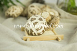 High Quality Dried Great White Flower Mushroom