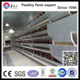 Layer Egg Steel Frame Poutry Chicken House