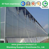 Agricultural Multi Span PC Sheet Greenhouse