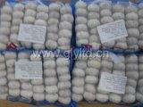 New Crop Mesh Bag Packing Chinese Garlic