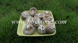 Wholesale Bulk Dried White Flower Mushroom Prices