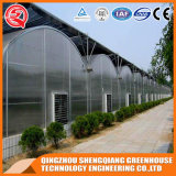 Agriculture Double Layer Multi-Span PE Film Greenhouse