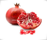 Manufacturer Natural Pomegranate Extract Powder