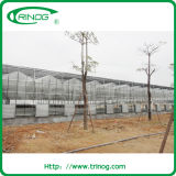 Large size Glass Greenhouse for farming