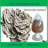 High Quality Organic Coriolus Versicolor Extract Powder