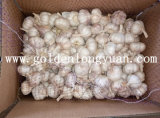Fresh Chinese Garlic Good Supplier From Jinxiang