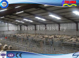Easy Fabrication Steel Poultry House/Shedfor Livestock (SSW-H-010)