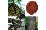 High Quality Pine Skin Extract Powder Skin Protection