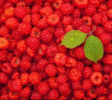 Stable Supply of High Quality Frozen Raspberry in New Crop
