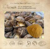 Shiitake Mushroom Extract/Polysaccharide 5-60%