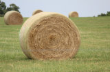 1.23*3000m White Bale Wrap Net for Australia