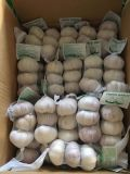10kg Mesh Bag Normal White Garlic