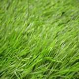 High Popular Plastuc Grass for Football Playground (SB)
