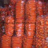 Red Sweet Fresh Carrot with High Production