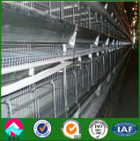 China Supplier Steel Structure Poultry Shed