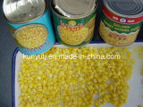 Canned Sweet Corn with High Quality