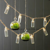 Frosted Glass Battery Jar Fairy Light Strings