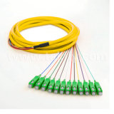 12 Core Sc APC Singlemode Breakout Ribbon Fiber Optic Pigtail