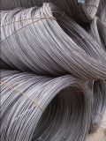Hot Rolled Steel Wire Rod Hpb235 Wire Rod in Coils