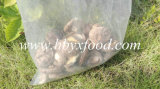 Popularly Selling Smooth Shiitake Mushroom Dried Food in Hubei