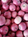 All Blush FUJI Apple From Shandong Province