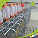 Pig Chain Auto Feeding System Fast Delivery and Save Time