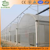 Hot Sale Po Film Agriculture Multi Span Greenhouse for Vegetable and Flower