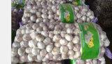 Good Quality Red Garlic Normal White Garlic