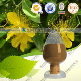 100% Natural Hypericum Perforatum Extract Hypericin