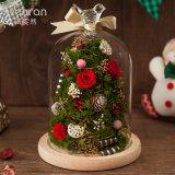 100% Natural Rose Flower for Christmas Gift