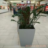 Fiberglass Flower Planter, FRP Flower Pot, GRP Fiberglass Planter