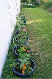 Galvanized Tomato Spiral Plant Support