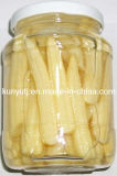 Canned Baby Corn with High Quality