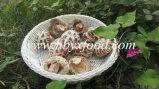 Dried Style Mushroom Product Dried White Flower Mushroom