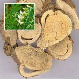 Factory Supply Sophora Root Extract, Matrine by HPLC