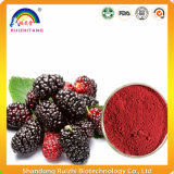 Pure White Mulberry Fruit Extract Powder Morus Alba Fruit Extract