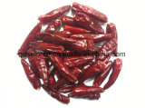 Chaotian Chilli of Pods (i. e. Tianying Chilli)