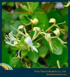 Honeysuckle Flowers Extract Powder Chlorogenic Acid