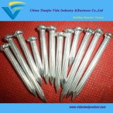 Biggest Factory Concrete Nails with Excellent Quality