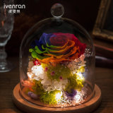Natural Real Flower for Gift Wedding Decoration