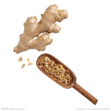 Ginger Extract Powder / Ginger Root Extract / 5% Gingerol